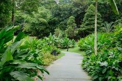 Ansicht der Bäume in botanischem Garten Singapurs Stockfotografie