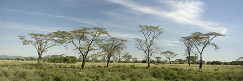Ansicht der Bäume im Serengeti stockfotos
