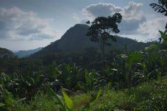 Ansicht der Bananenplantage gegen Gebirgshintergrund lizenzfreies stockfoto