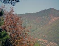 Ansicht der Berge in den Wäldern stockfotografie