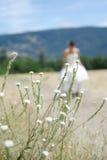 Ansicht der Braut durch das Gras Stockfotografie
