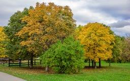 Ansicht der bunten Gasse mit gelb gefärbten Kastanien und Fliederbusch, niedriger Zaun, grüner Rasen und bewölkter Himmel im Park Lizenzfreies Stockfoto