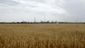 Ansicht der Fabrik mit schönem natürlichem Feld stock footage