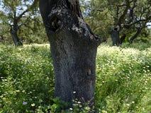 Ansicht der Felder und der Landschaft über Embalse de Guadalcacin, nahe der Stadt von San Jose del Valle, innerhalb des Parque na lizenzfreies stockbild