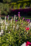 Ansicht der Gärten 2 Lizenzfreie Stockfotos