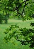 Ansicht der grünen Blätter Stockbild