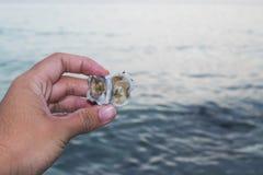 Ansicht der Hand im Strand der Sommerzeit mit dem Oberteil auf der Hand des jungen Mannes stockbild