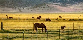 Ansicht der Hunewill-Ranch nahe Bridgeport, Kalifornien im Spätfrühling stockbilder