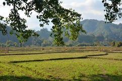 Ansicht der Landschaft des Paddy- oder Reisfeldes in der Morgenzeit Stockfotos