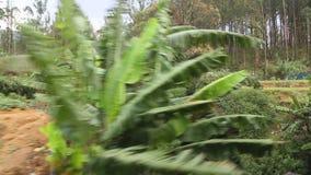 Ansicht der Landschaft von beweglichem Zug vom Fenster eines Passagiers an Bord stock video