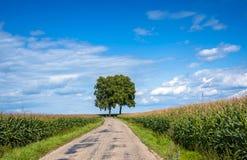 Ansicht der leeren Straße mit Getreidefeld und Bäumen Stockbild
