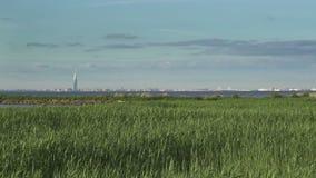 Ansicht der modernen Bezirke von St Petersburg mit Wolkenkratzern und Brücken durch das Finnische Meerbusen im Sommer sonnig stock video
