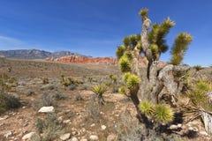 Ansicht der Mojave-Wüste. Stockbilder