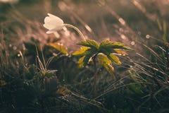 Ansicht der Nahaufnahme auf Wildflower am Sonnenlicht Schön von der Frühlingslandschaft Stockfotos