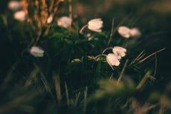 Ansicht der Nahaufnahme auf Wildflower am Sonnenlicht Schön von der Frühlingslandschaft Lizenzfreie Stockfotografie