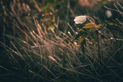 Ansicht der Nahaufnahme auf Wildflower am Sonnenlicht Schön von der Frühlingslandschaft Stockbild