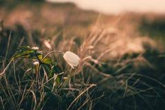 Ansicht der Nahaufnahme auf Wildflower am Sonnenlicht Schön von der Frühlingslandschaft Stockfotografie