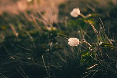 Ansicht der Nahaufnahme auf Wildflower am Sonnenlicht Schön von der Frühlingslandschaft Lizenzfreies Stockbild
