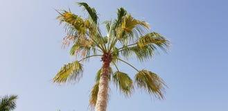 Ansicht der Palme in Parque Santiago stockbild
