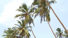 Ansicht der Palmen, die in den Wind in Mirissa, Sri Lanka fließen stock video footage