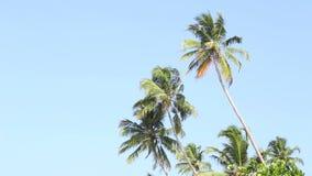 Ansicht der Palmen, die in den Wind in Mirissa, Sri Lanka fließen stock footage