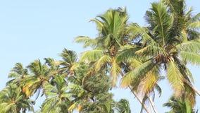 Ansicht der Palmen, die in den Wind in Mirissa, Sri Lanka fließen stock video