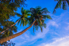 Ansicht der Palmen gegen Himmel Vietnam, Mui Ne, Asien Lizenzfreies Stockfoto