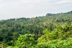 Ansicht der Reisterrassen Boracay Philippinen stockbild