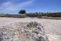 Ansicht der Ruinen der alten Stadt von Zippori, Israel Im Vordergrund ist ein Flechte-bedeckter Steinblock stockfotos