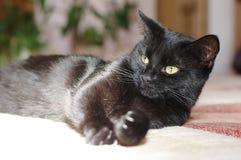 Ansicht der schwarzen Katze Makro Grünes Auge Lizenzfreies Stockfoto