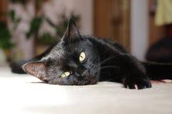 Ansicht der schwarzen Katze Makro Grünes Auge Lizenzfreie Stockfotografie