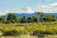 Ansicht der Spuren und der Savanne Samburu-Parks stockbilder