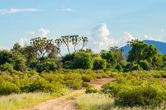 Ansicht der Spuren und der Savanne Samburu-Parks lizenzfreie stockfotografie