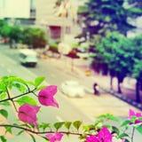 Ansicht der Stadt - die Blumen und die Straße mit Autos Selektiver Fokus stockfoto