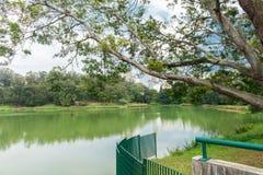 Ansicht der Stadtwolkenkratzer vom Aclimacao-Park Stockbilder