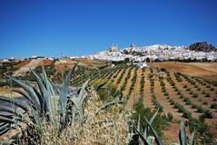 Weiße Stadt, Olvera, Andalusien, Spanien. Lizenzfreie Stockfotos