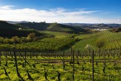 Ansicht der Weinberge und der Wolken im Langhe Piemont lizenzfreies stockbild