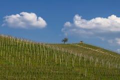Ansicht der Weinberge und der Wolken im Langhe Piemont stockfotos