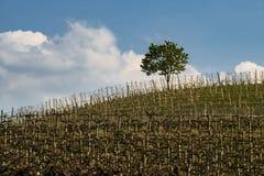 Ansicht der Weinberge und der Wolken im Langhe Piemont stockbilder
