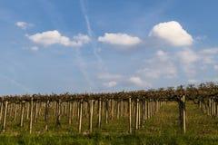 Ansicht der Weinberge und der Wolken im Langhe Piemont lizenzfreie stockfotografie