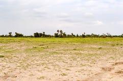 Ansicht der Wiese mit Farnen und Palmen in der Savanne von Stockfotos