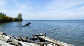 Ansicht der wilden Küste eines Reservoirs mit Baumstümpfen stockfotos