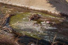 Ansicht des Abwassers, der Verschmutzung und des Abfalls in einem Kanal Lizenzfreies Stockbild