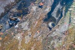 Ansicht des Abwassers, der Verschmutzung und des Abfalls in einem Kanal Lizenzfreies Stockfoto