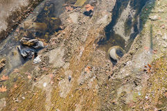 Ansicht des Abwassers, der Verschmutzung und des Abfalls in einem Kanal Stockfoto