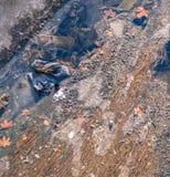 Ansicht des Abwassers, der Verschmutzung und des Abfalls in einem Kanal Lizenzfreie Stockfotografie