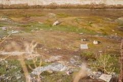 Ansicht des Abwassers, der Verschmutzung und des Abfalls in einem Kanal Stockbilder
