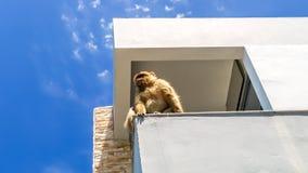 Ansicht des Affen auf die Oberseite des Gebäudes auf dem Berg, gibra Lizenzfreie Stockfotos