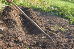Ansicht des Begräbnisses der jungen Kartoffeln eigenhändig in den Boden mit einer Rührstange im Garten Lizenzfreie Stockfotos