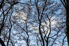 Ansicht des blauen hellen bewölkten Himmels durch die Niederlassungen Stockfotos